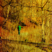 Buy canvas prints of Through The Wood by M Palmer