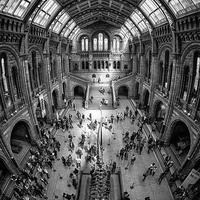 Buy canvas prints of Natural History Museum, London by Stephen Birch