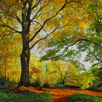 Buy canvas prints of Autumn Colours Sheffield Botanical Gardens by Darren  Galpin