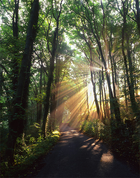 Light Rays through Castleton Lane,Peak District Canvas print by Darren  Galpin