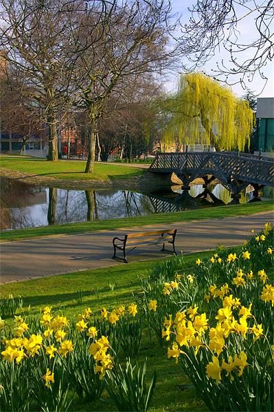 Weston Park, Sheffield Framed Mounted Print by Darren  Galpin