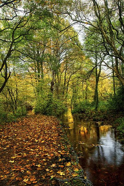 Autumn Gold Canvas print by Darren  Galpin