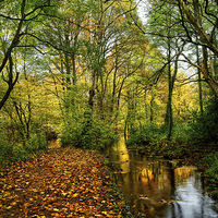 Buy canvas prints of Autumn Gold by Darren  Galpin