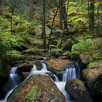 Buy canvas prints of Wyming Brook Nature Reserve by Darren  Galpin
