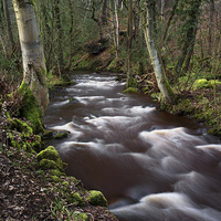 Buy canvas prints of Rivelin Woods by Darren  Galpin