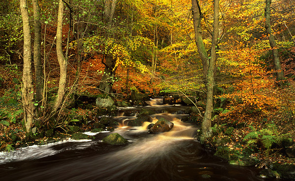 Autumn Glory in Padley Gorge Framed Mounted Print by Darren  Galpin