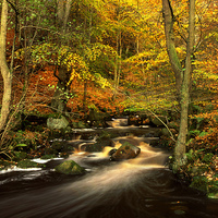 Buy canvas prints of Autumn Glory in Padley Gorge by Darren  Galpin