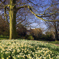 Buy canvas prints of Sheffield Botanical Gardens in Spring by Darren  Galpin