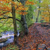 Buy canvas prints of Rivelin Woodland Walk by Darren  Galpin
