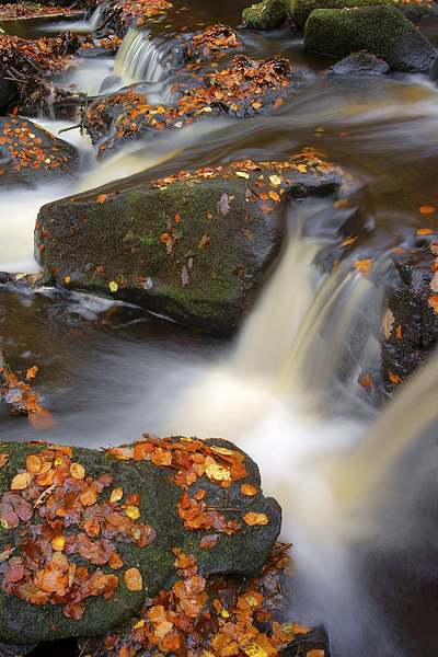 On the Rocks in Padley Gorge  Canvas print by Darren Galpin