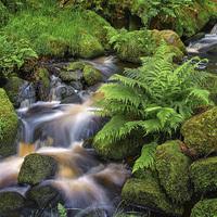 Buy canvas prints of Wyming Brook in Summer by Darren Galpin