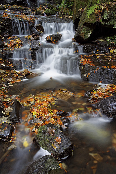 Lumsdale Waterfalls with Autumn Leaves  Canvas print by Darren Galpin