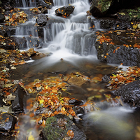 Buy canvas prints of Lumsdale Waterfalls with Autumn Leaves  by Darren Galpin