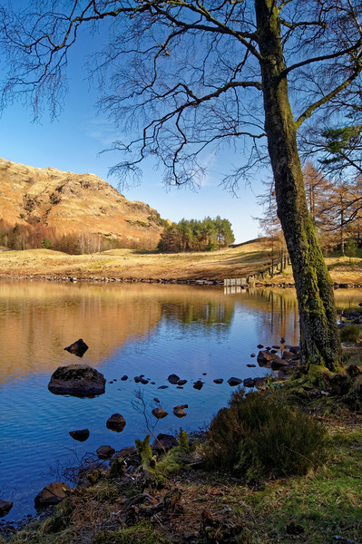 The Banks of Blea Tarn                       Canvas print by Darren Galpin