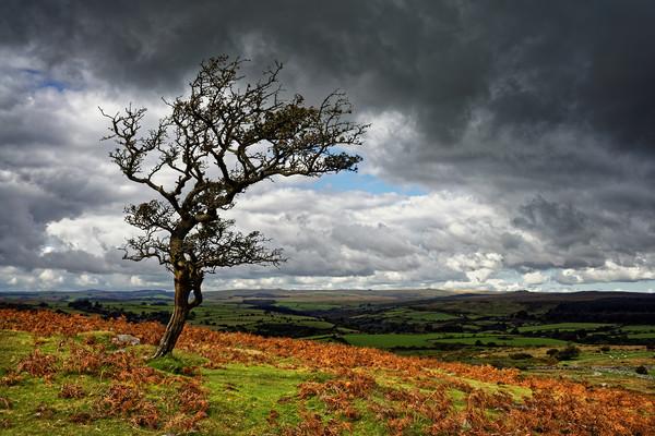 Dark Clouds over Combestone Tor                    Canvas print by Darren Galpin