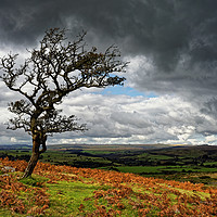 Buy canvas prints of Dark Clouds over Combestone Tor                    by Darren Galpin