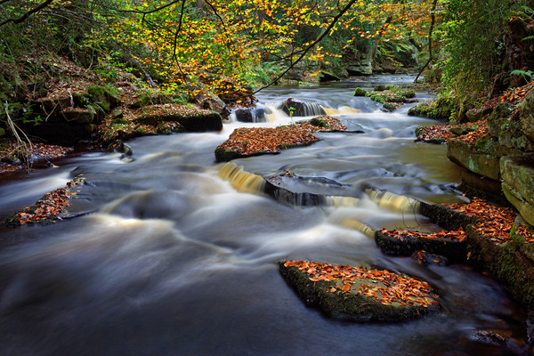 Rivelin Autumn Colours                             Canvas print by Darren Galpin
