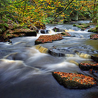 Buy canvas prints of Rivelin Autumn Colours                             by Darren Galpin