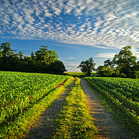 Buy canvas prints of Chard Countryside                      by Darren Galpin