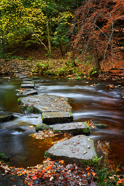 Rivelin Stepping Stones                            Canvas print by Darren Galpin