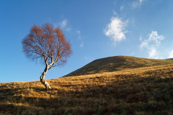 Lone Tree & Dean Hill                    Canvas print by Darren Galpin
