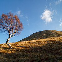 Buy canvas prints of Lone Tree & Dean Hill                    by Darren Galpin