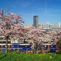 Buy canvas prints of Sheffield Skyline from South St Park               by Darren Galpin