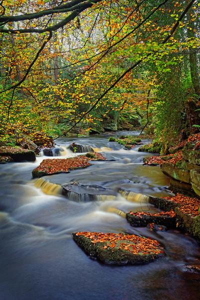 Rivelin during Autumn                              Canvas print by Darren Galpin