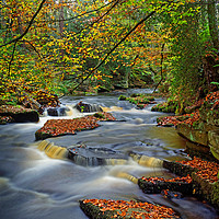 Buy canvas prints of Rivelin during Autumn                              by Darren Galpin