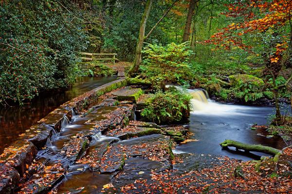 Third Coppice Weir in Autumn                      Canvas print by Darren Galpin
