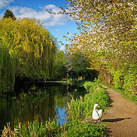 Buy canvas prints of Elsecar Canal in Spring                     by Darren Galpin