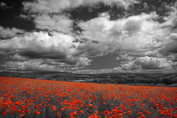 Poppy Field near Baslow,Derbyshire                 Canvas print by Darren Galpin