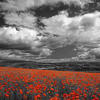 Buy canvas prints of Poppy Field near Baslow,Derbyshire                 by Darren Galpin
