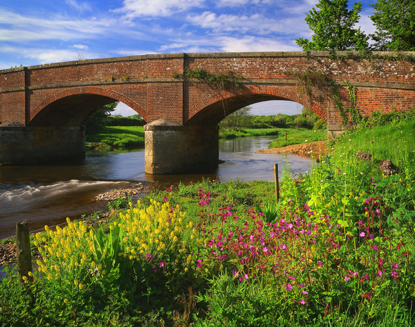 Gosford Bridge & the River Otter Canvas Print by Darren Galpin