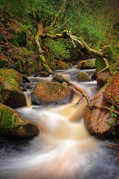 Wyming Brook in Autumn                             Canvas Print by Darren Galpin