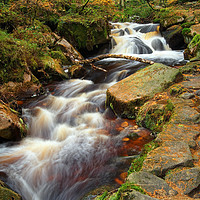 Buy canvas prints of Wyming Brook in Autumn                        by Darren Galpin