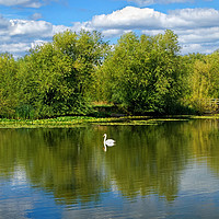Buy canvas prints of Swan Lake                              by Darren Galpin