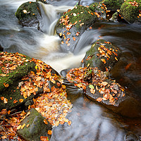 Buy canvas prints of Padley Gorge in Autumn                             by Darren Galpin