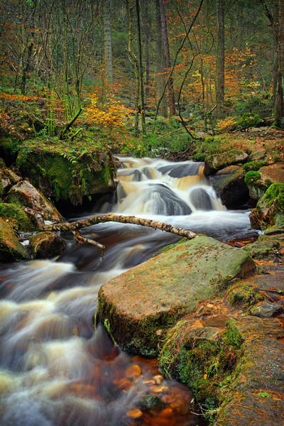Wyming Brook in Autumn                             Framed Mounted Print by Darren Galpin
