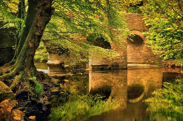 River Plym at Plymbridge Print by Darren Galpin