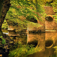 Buy canvas prints of River Plym at Plymbridge by Darren Galpin