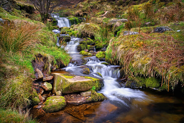Blackden Brook   Canvas Print by Darren Galpin