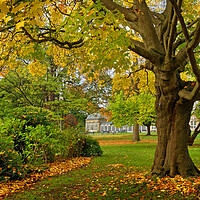 Buy canvas prints of Sheffield Botanical Gardens in Autumn by Darren Galpin