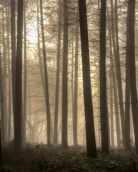 Moody Morning Fog Canvas Print by Darren Ball