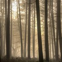 Buy canvas prints of Moody Morning Fog by Darren Ball