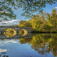 Buy canvas prints of Clumber Park by Darren Ball