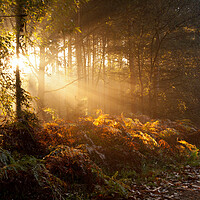 Buy canvas prints of early morning sunbeams by Darren Ball