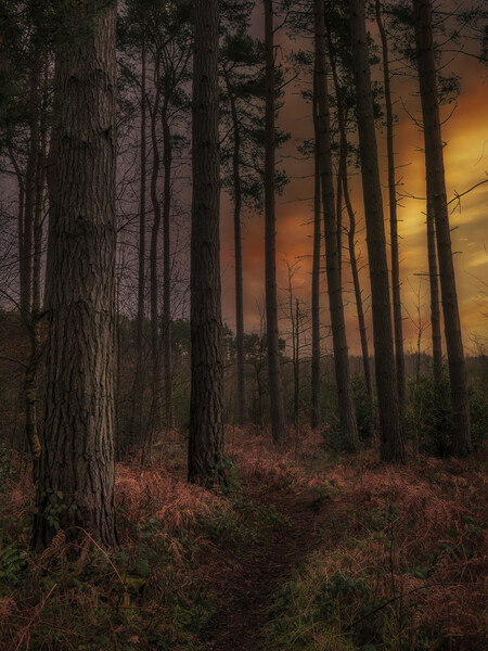 Thieves Wood Canvas Print by Darren Ball