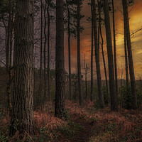 Buy canvas prints of Thieves Wood by Darren Ball