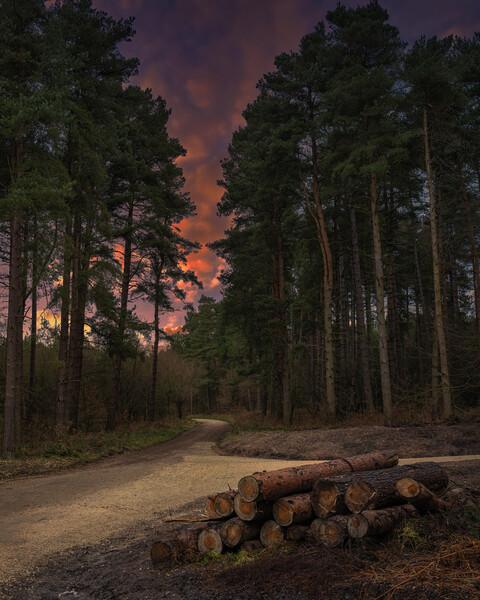 Woodland Sunset Canvas Print by Darren Ball